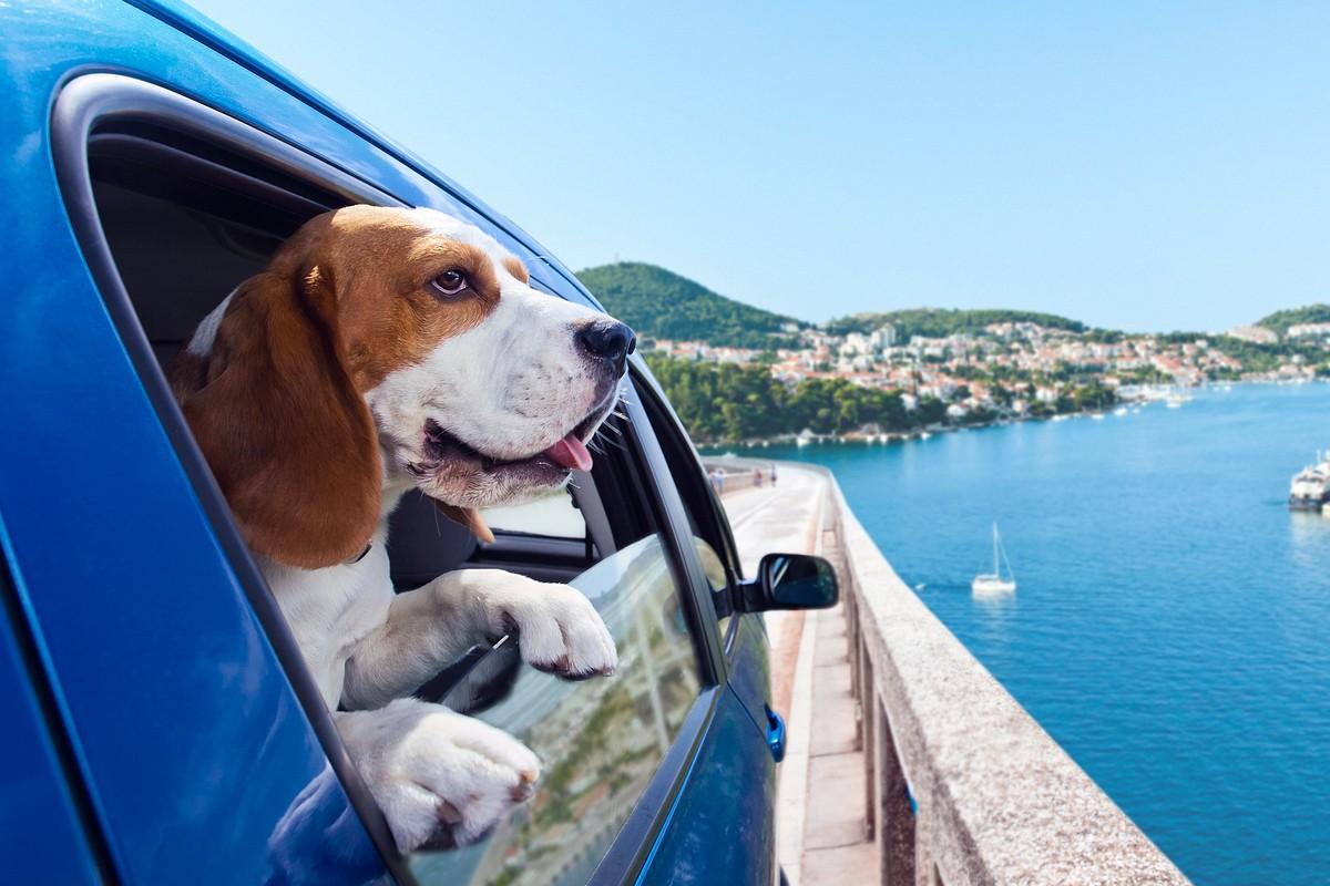 DA SAPERE - Trasportare animali domestici